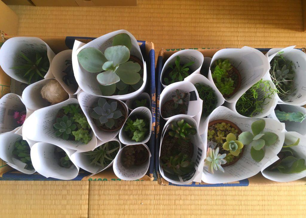 引っ越し時の多肉植物