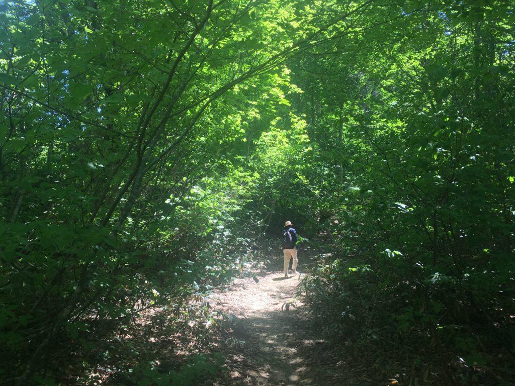 木漏れ日の散歩