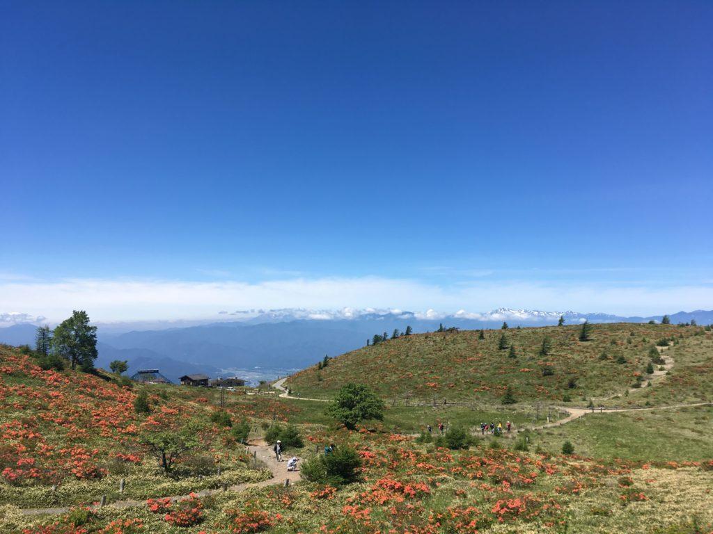 鉢伏山のレンゲツツジ