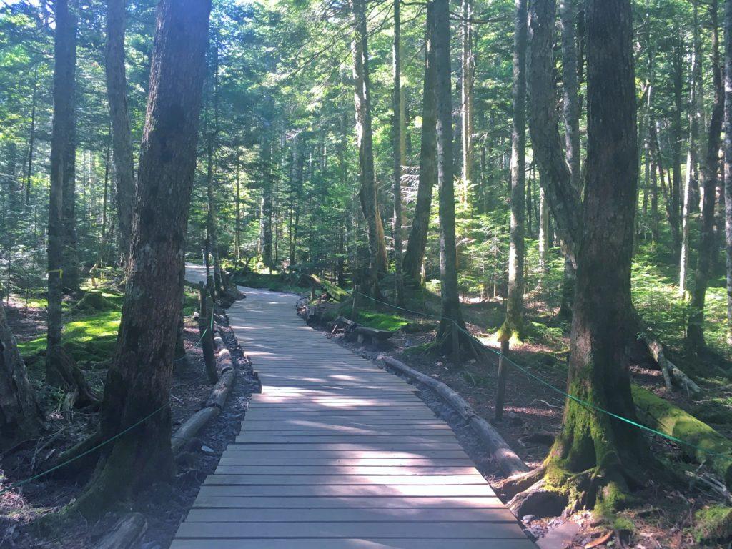 白駒池の遊歩道