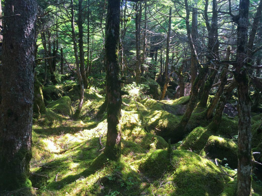 白駒池の苔の森