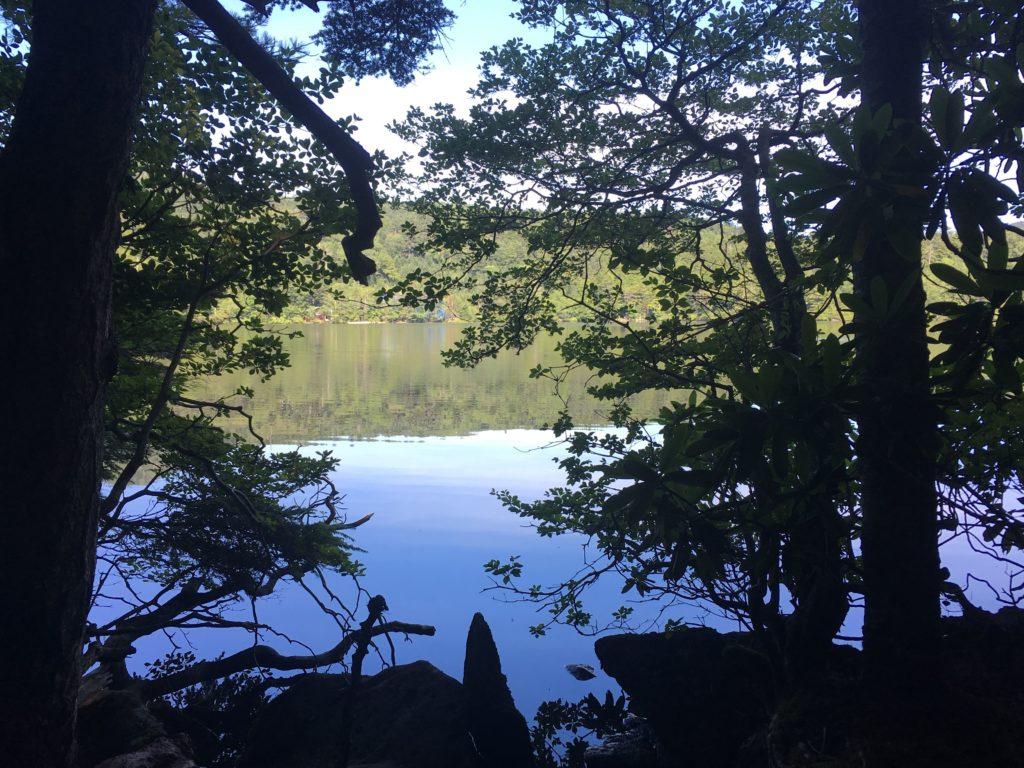 木々の間から見える白駒池