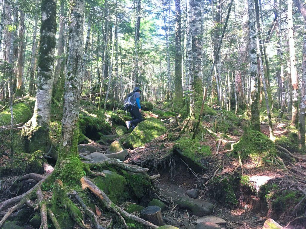 にゅうの森登山道