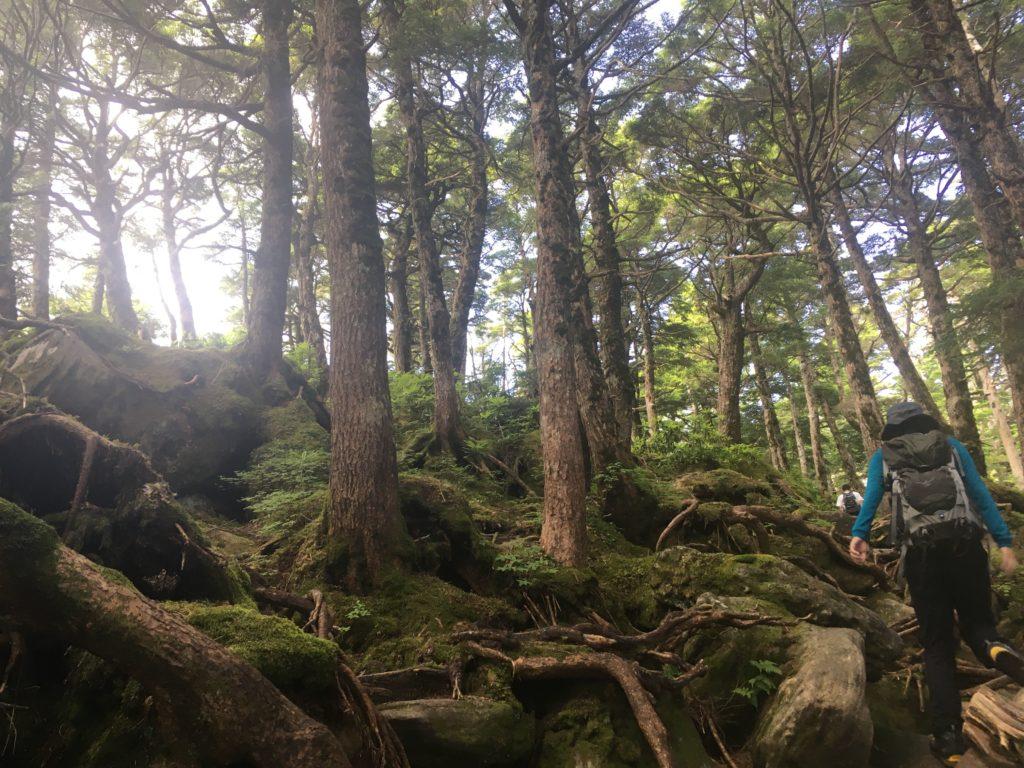 にゅうから中山展望台登山道
