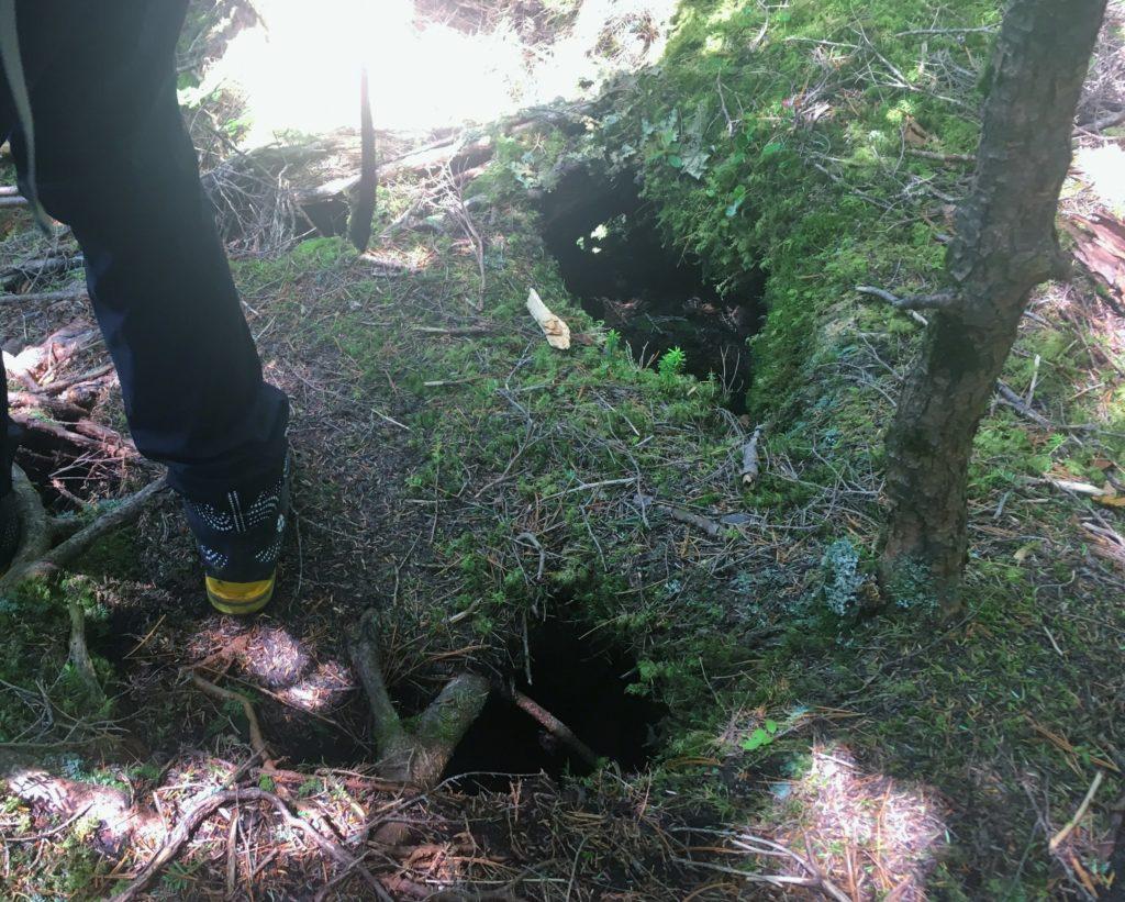 木の根の上に土がのっただけの道
