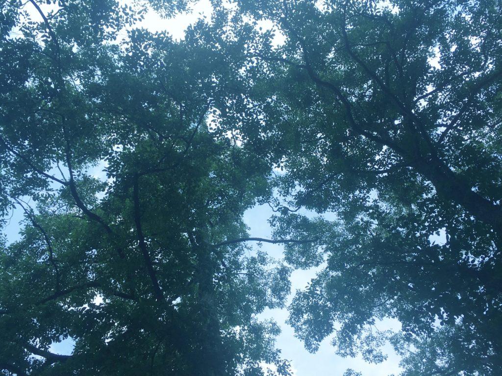 アルプスブックキャンプ見上げた空