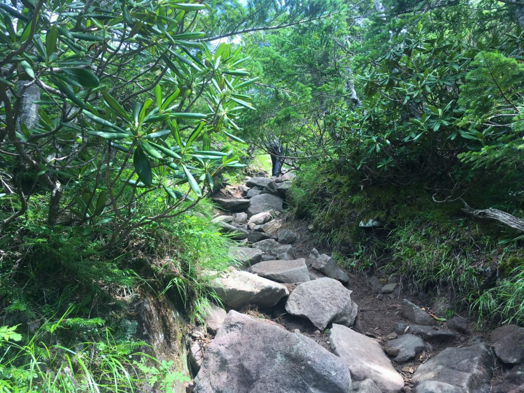 編笠山山頂に向かう道中