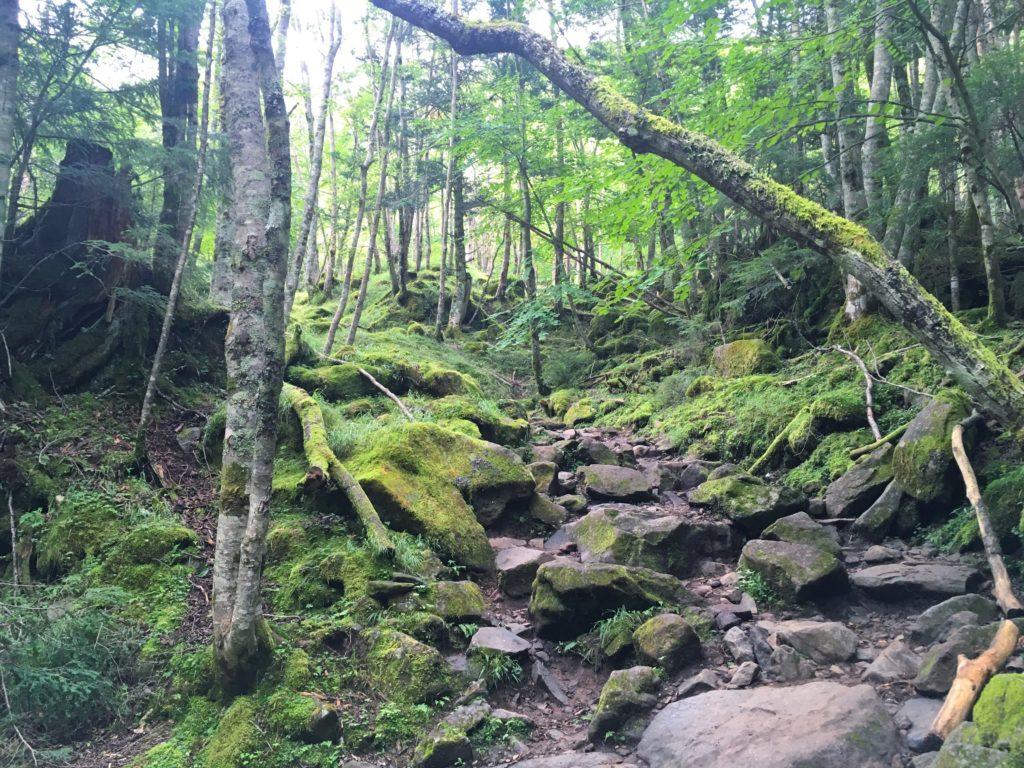 赤岳ふもとの登山道