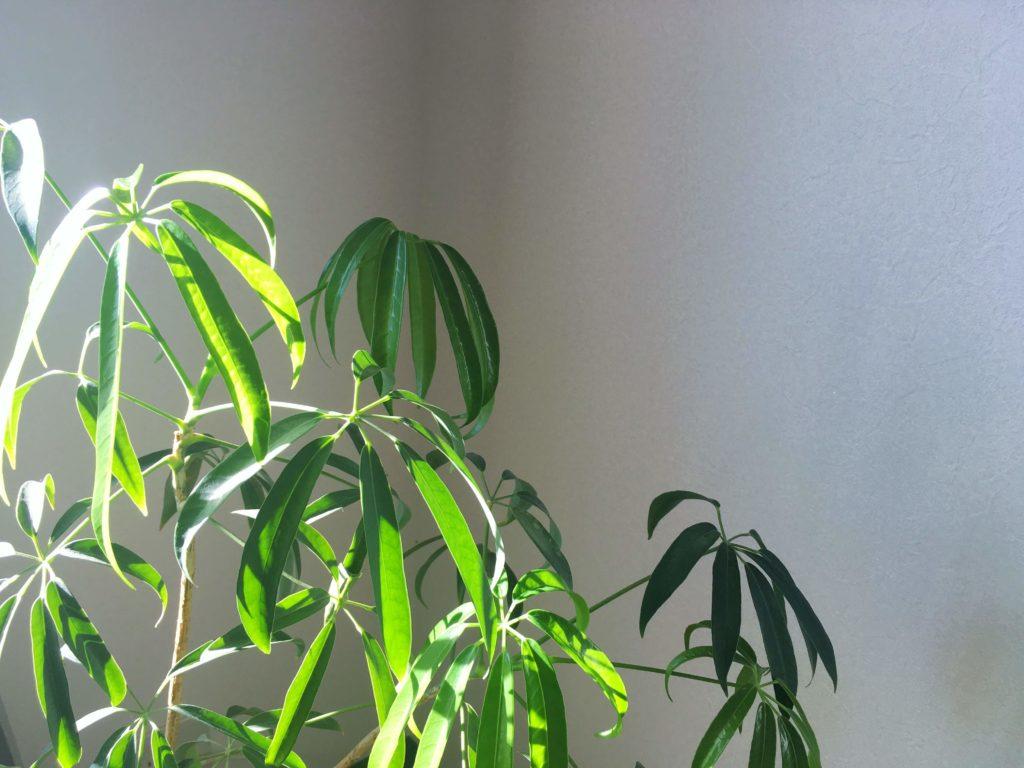 朝日を浴びる植物