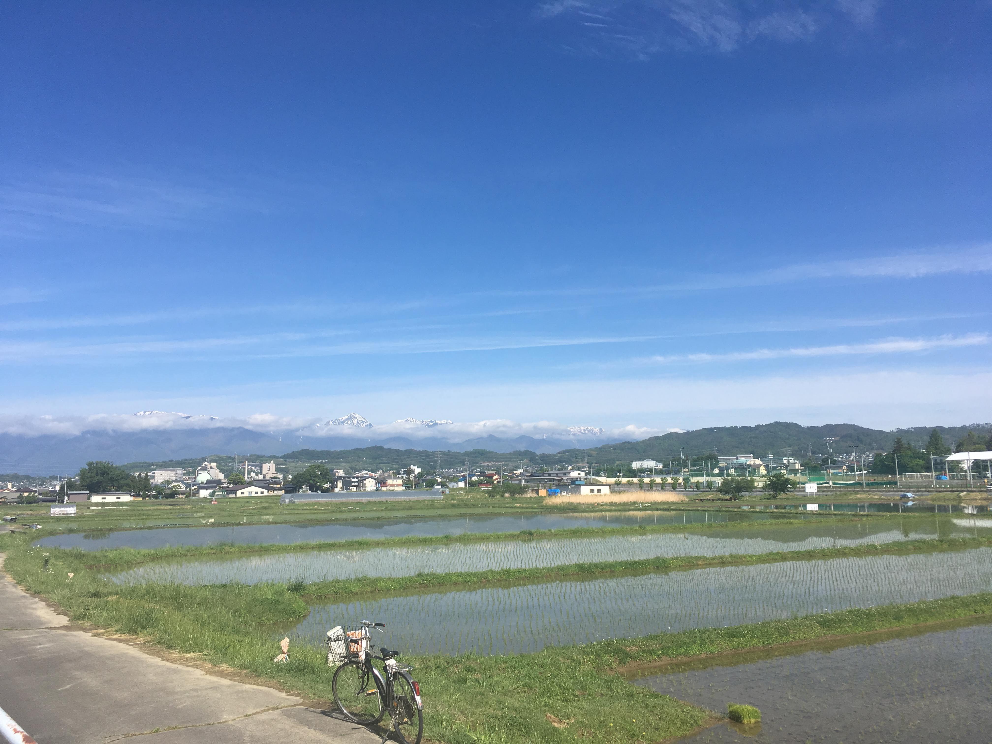 里山の田んぼ